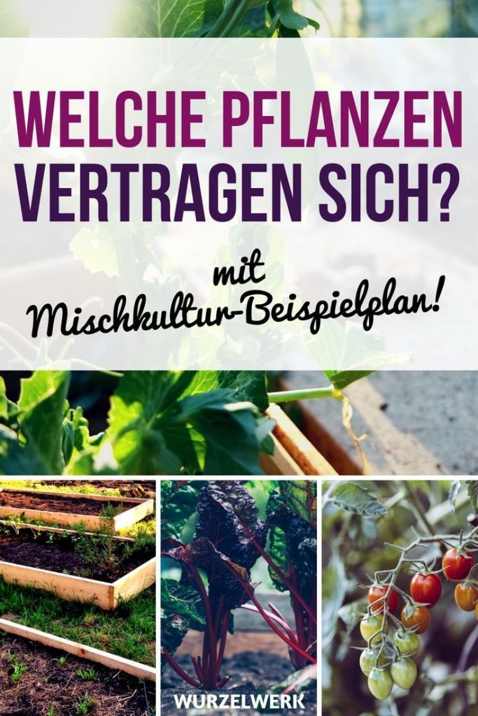 28 vegetable species and their most effective mixed culture partners + Sample Plan: Which ...