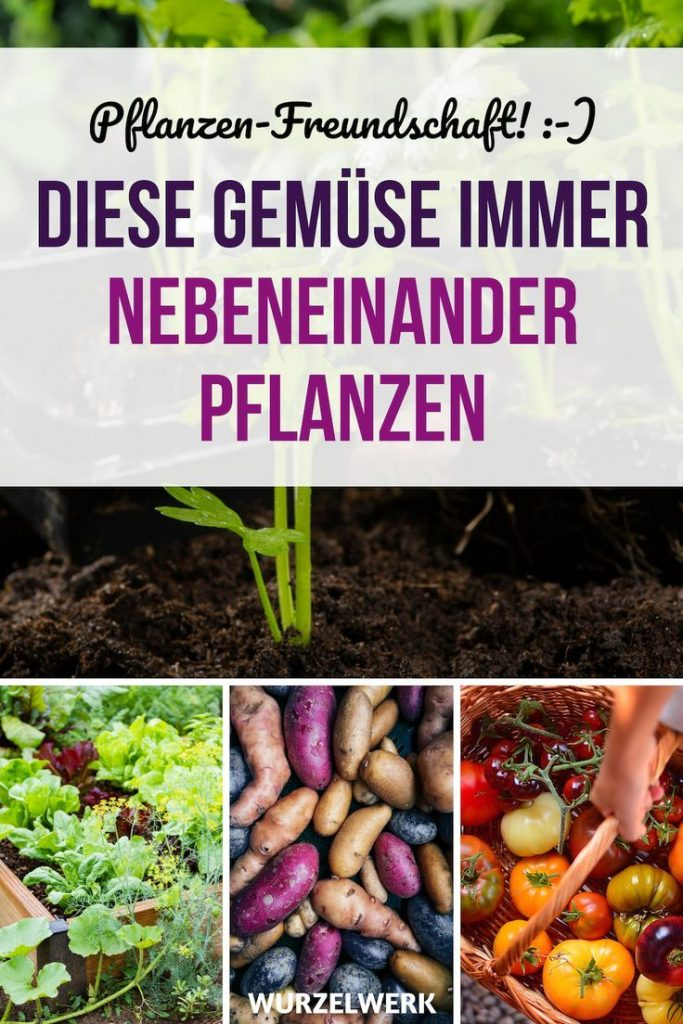 28 Vegetables and Their Most Effective Mixed-Culture Partners + Sample Plan: You Ask ...