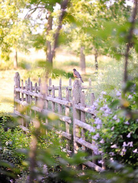Gorgeous Garden at a Historic Home An overgrown Tudor home and garden is magnifi...
