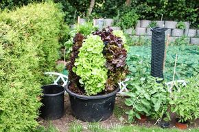 Salad tree | salad tower | urban gardening || Salad tree | Salad tower | Gardening ...