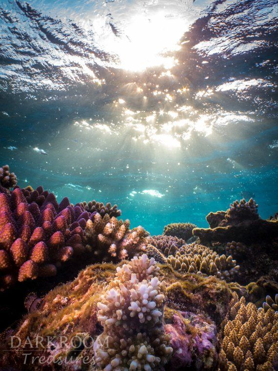 Coral Reef Sunrise - Great Barrier Reef Underwater Photography Print