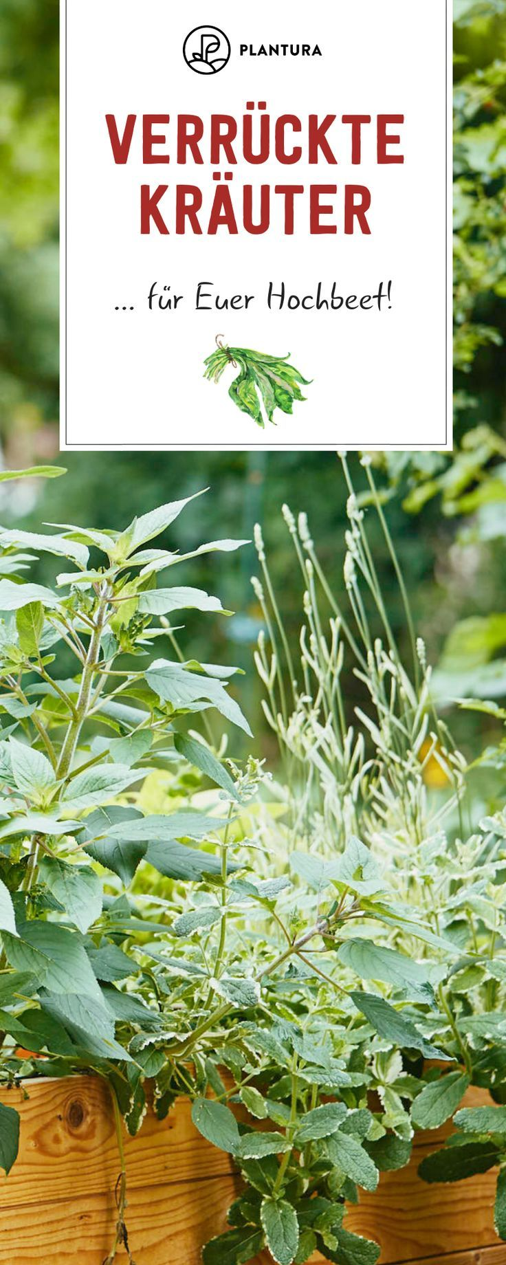 Crazy Herbs for your raised bed: You probably still have these herbs ...