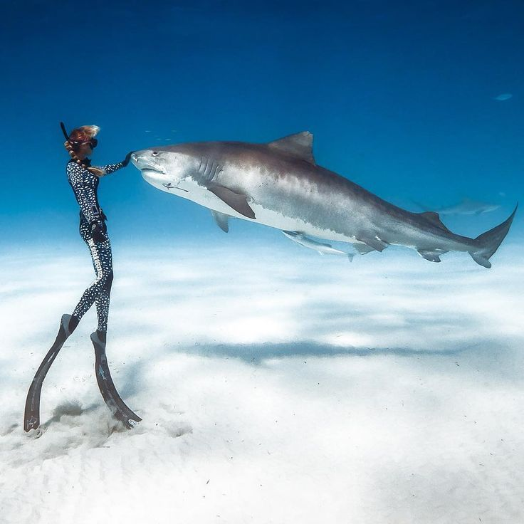 """""""Dancing With Sharks"""": Incredible Underwater Photography By Juan Oliphant"""