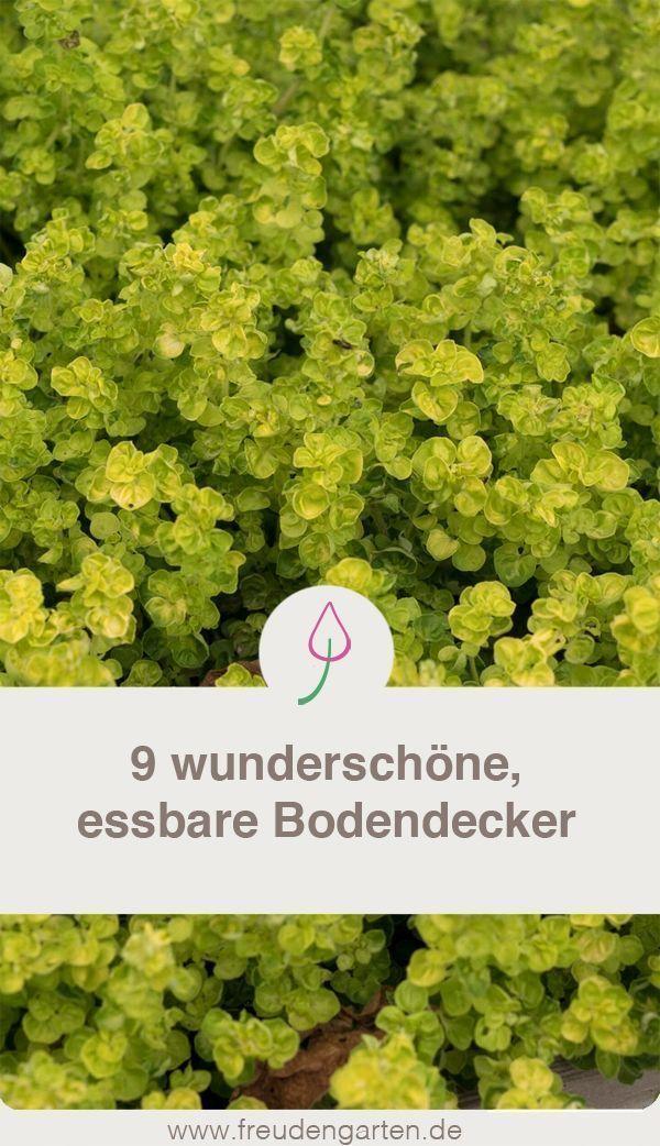 Edible groundcover for lazy gardeners #garden #garden #plants