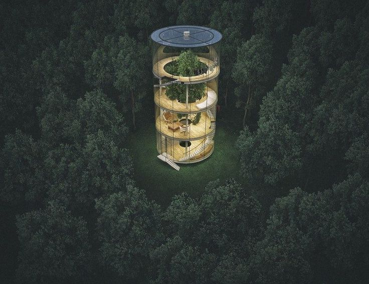 A glasshouse built around a tree - a new kind of architecture
