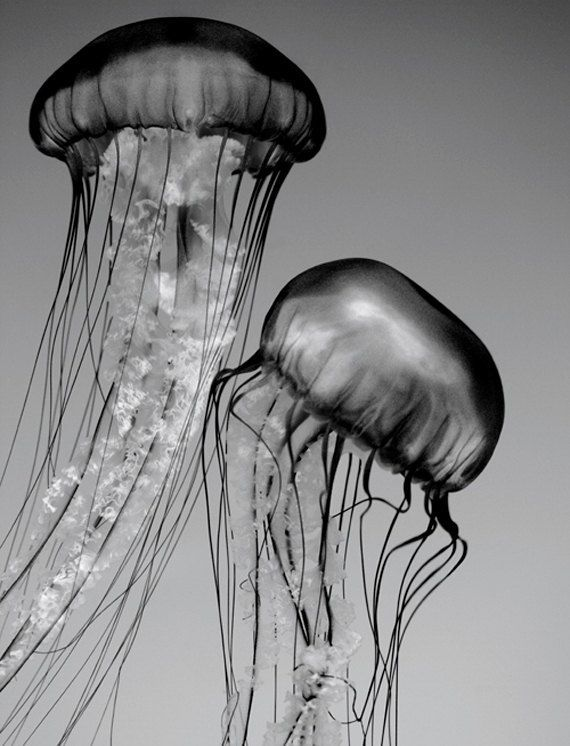 jellyfish underwater | photography black & white. Black and white photography . ph ...