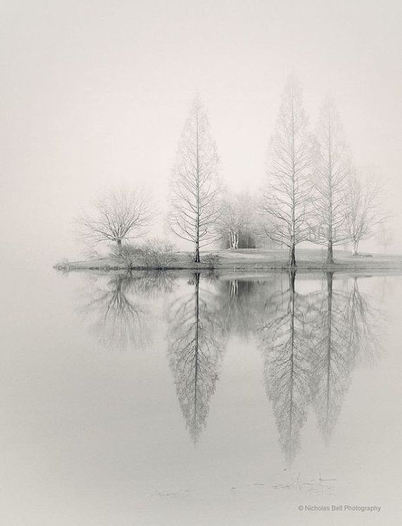 landscape photography, monochromatic, nature, fog, foggy, trees, winter, WINTER ...