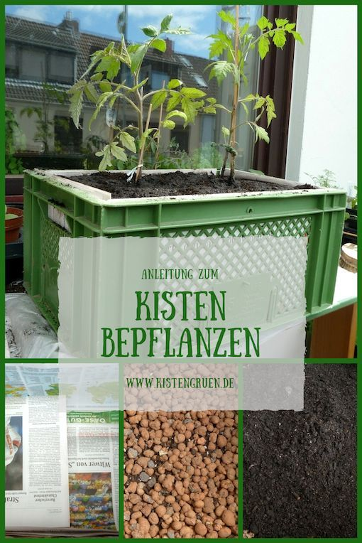 Plant boxes with vegetables, herbs and flowers for the balcony