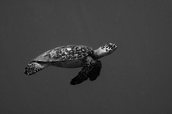 Sea Turtle Art Underwater Photography print of Sea by ZahnerPhoto