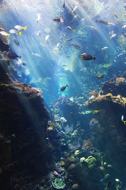 Solar Power by NMB.Photography, via Flickr, taken at the California Academy of S...