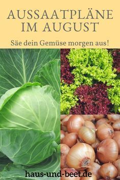 Sowing Plans in August: Sow your autumn vegetables tomorrow. Build your Ge ...