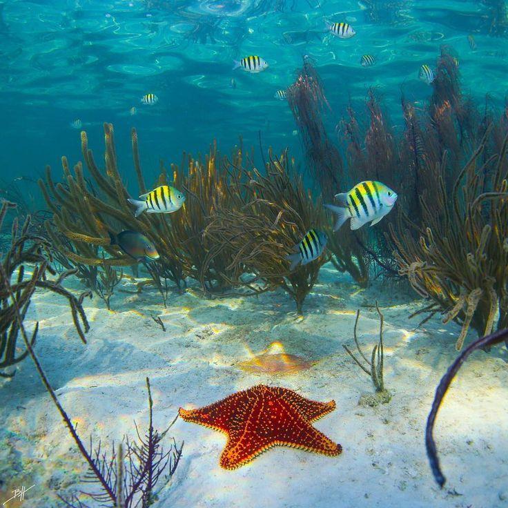 Striking Underwater Photography by Ben Hicks #photography #underwater #adventure...