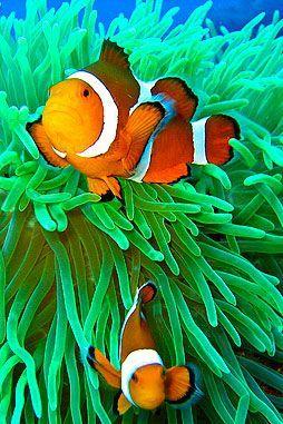 Underwater Photography Portfolio: Coral Reefs, Clown Fish, Sea Turtles and SCUBA...