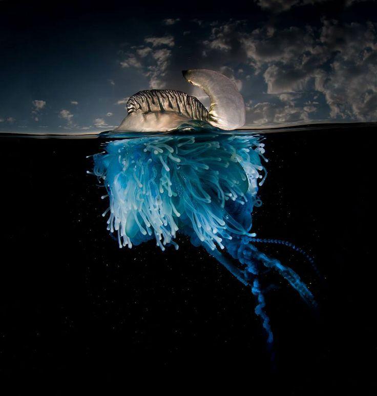 surface-half-underwater-photography-over-under-matty-smith-17...