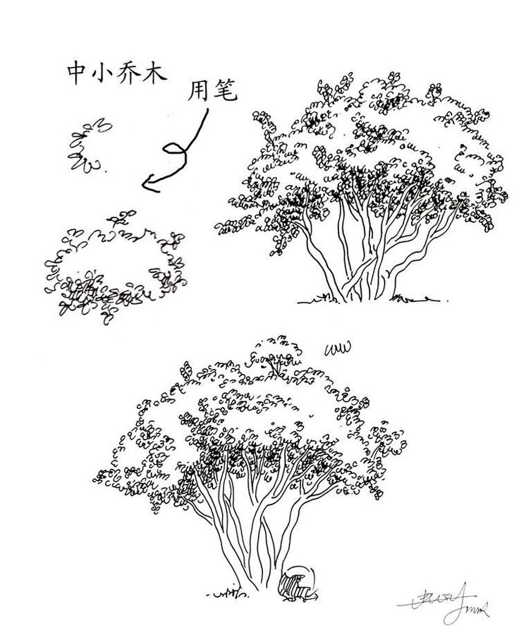 urban sketch tree - google search ...