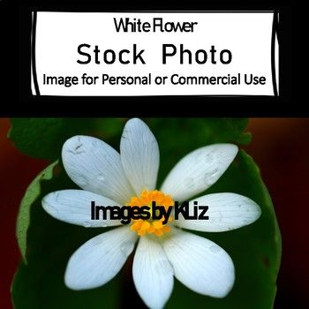 Horizontal White Flower Stock Photo for Personal or Commercial Use - Can be used...