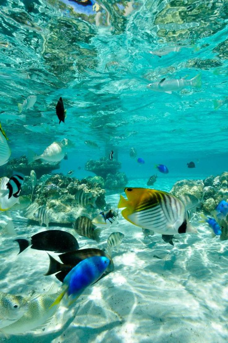 Snorkeling in Honolulu is the best beach activity ever!...