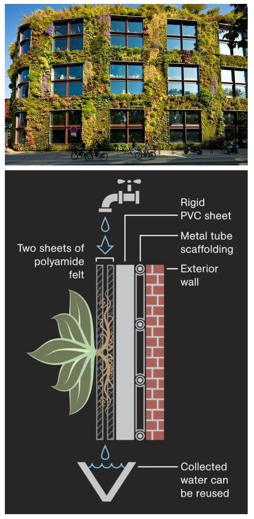 Living Wall - vertical gardens. An example of the type of sustainable activity t...