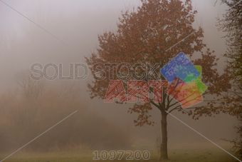 stock photo of trees in the fog horizontal landscape image...