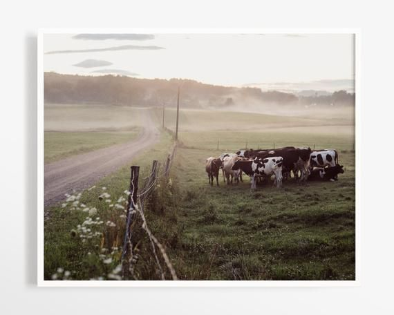 Fine art photo print from my series of cows in the fog in the country. See more ...