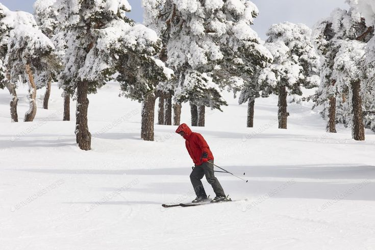 Skiing on a beautiful snow forest landscape. Winter sport. Horizontal By ABBPhot...